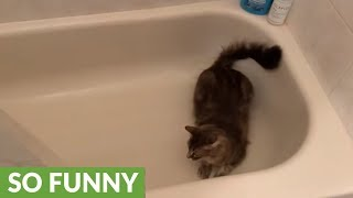Then and now footage shows cat's love for bathtub zoomies
