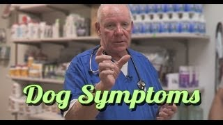 dog symptoms is my dog sick how to read dog symptoms ask the expert   dr david randall
