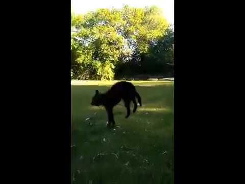 Deco the Jumping dog