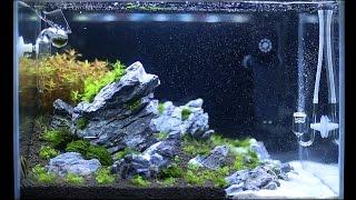 Setup Nature Aquarium Step-by-step