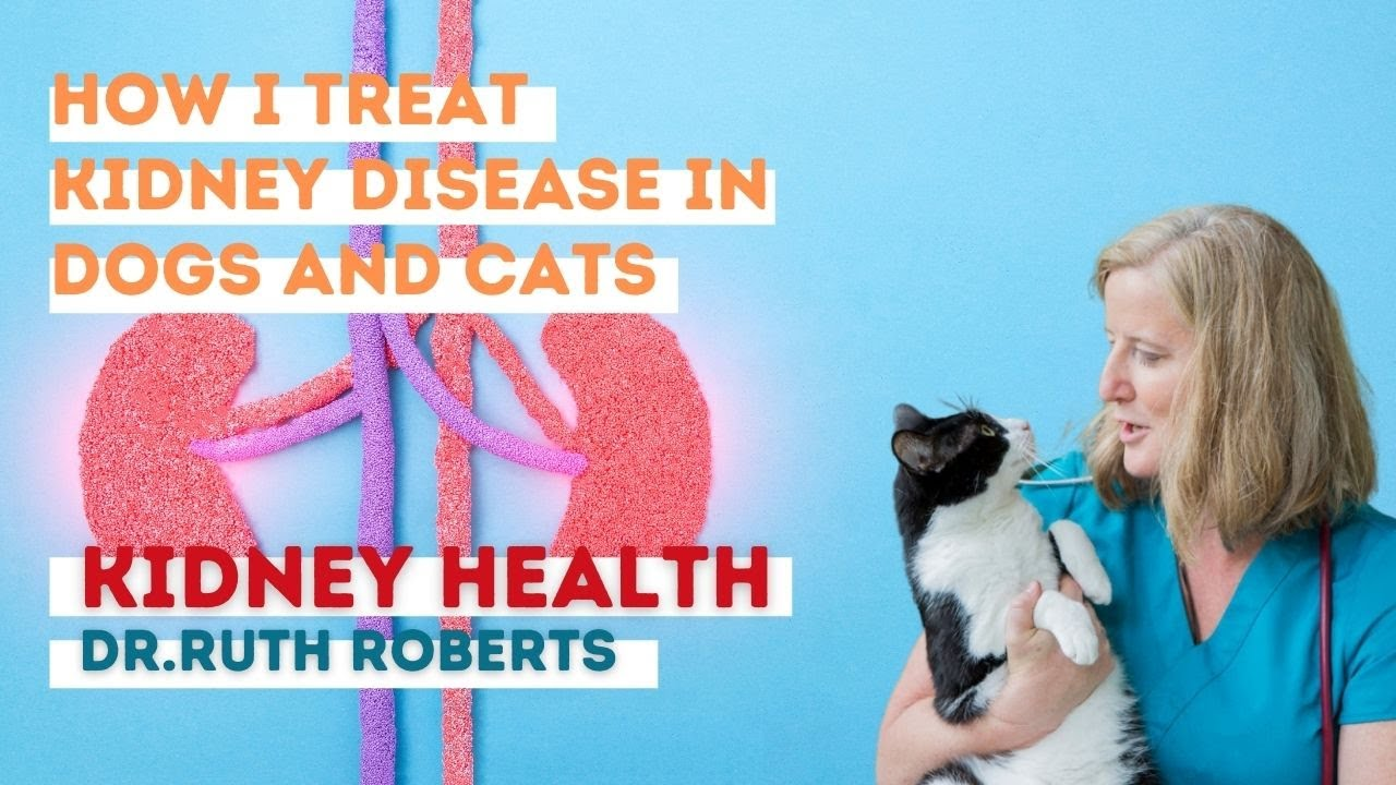 Dr ruth roberts how i treat kidney disease in dogs and cats youtube dr ruth roberts how i treat kidney disease in dogs and cats forumfinder Image collections