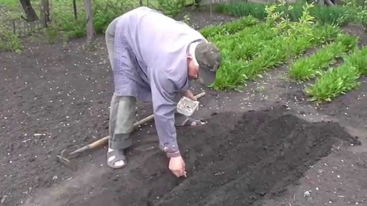 Продам чеснок на посадку, семена чеснока,воздушка чеснока, однозубка чеснока,зубок чеснока,оптом и в розницу. В европе чеснок,купить,цена на чеснок в украине цена на чеснок европе,стоимость цена чеснока,закупка чеснока продам часник на посадку, семена.
