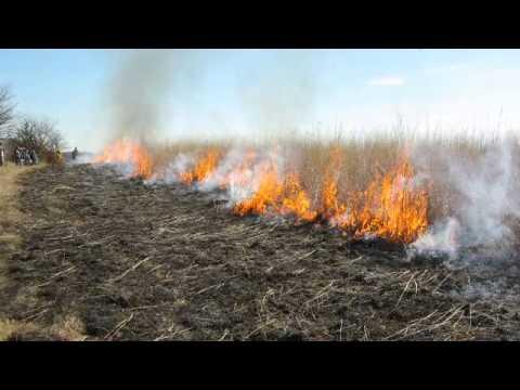 Preserving the Tallgrass Prairie