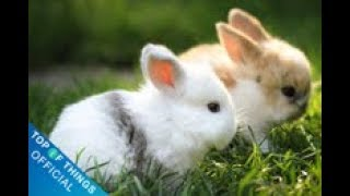 Top 9 most beautiful rabbits in the world #1 | Top of things