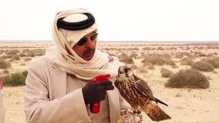 سق ياسعد|| اداء: عبدالعزيز العليوي ، (من مقناص العراق2016)