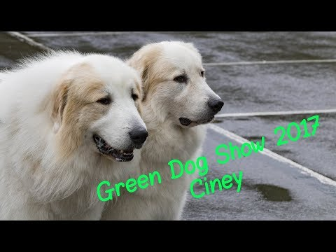 Green Dog Show de Ciney 2017