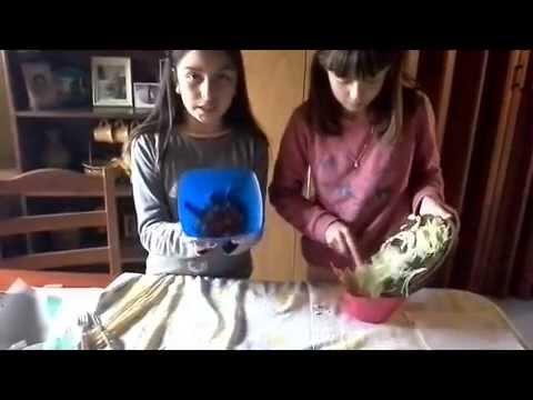 Buñuelos de lechuga y tomate
