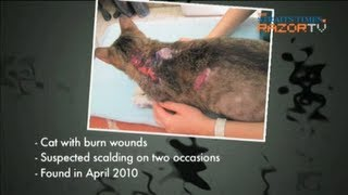 Frustrated Owners, Abused Pets (horrific Animal Abuse Part 1)