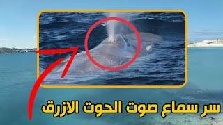 سر سماع صوت الحوت الازرق في مصر والجزائر وليبيا | ناصر حكاية