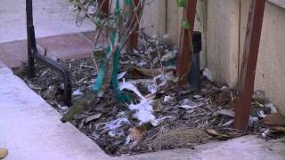 Things to know when you provide hummingbirds nesting materials