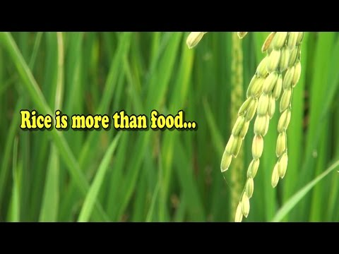 Food Facts - Rice - The global staple