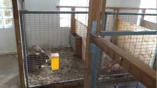 Содержания кроликов крупных пород в вольерах в помещении