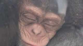 今日、仕事が早く終わったので久しぶりに旭山動物園に行ってきました。...