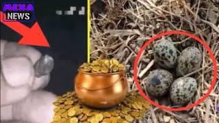 यह पक्षी  मिनट में आपको बना सकता है करोड़पति
