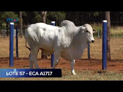 LOTE 57 - ECAA1717 - NELORE