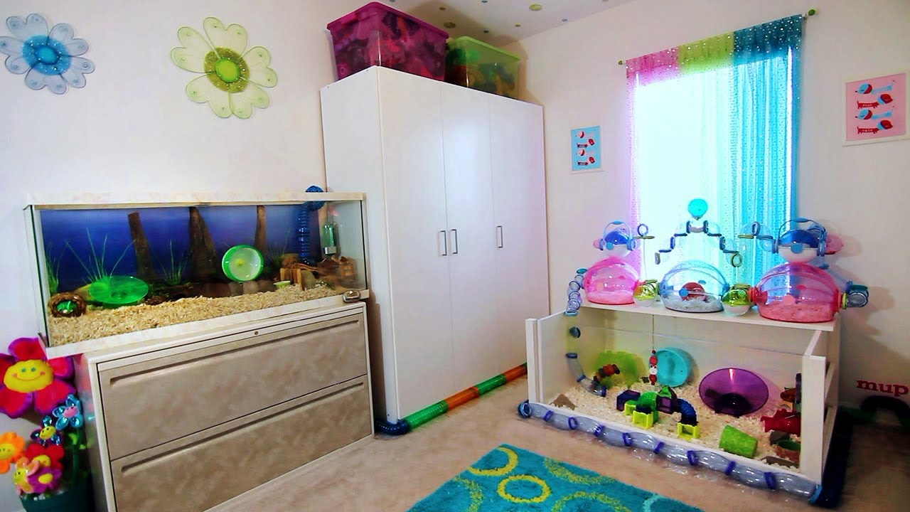 Hamster Room Tour Frozen Youtube