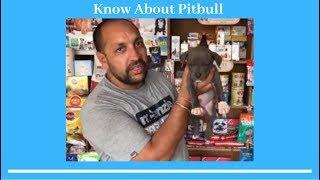 Dog Breed - Know About Pitbull - Bhola Shola