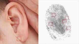 25 Curiosidades sobre el cuerpo humano