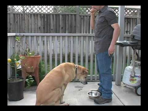 Dog Training: Chow Time-A Dog Feeding Routine - Thriving Canine