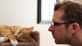 毎朝毎朝、無理やり起こす猫に復讐を…?カリスマ猫下僕クリスさんの場合