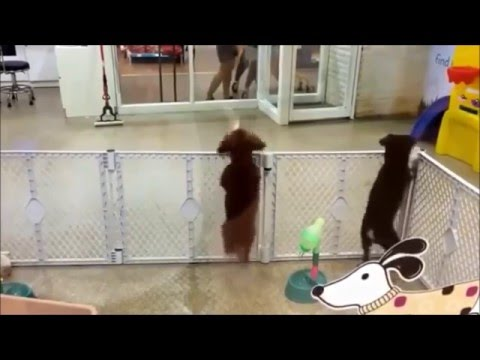 Dancing Dog: Excited To See It's Owner Arrive