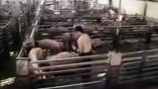 減少吃肉的需求,不但可以減少不人道的屠殺,也能減少對地球的傷害!!!愛護...