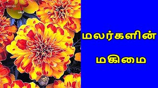 மலர்களின் மகிமை | Glory of Flowers | Britain Tamil Bhakthi