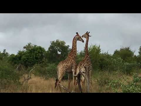 Into Africa 🐆 Moms Travel Adventure Kruger Park South Africa 2017  🇿🇦