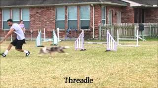 How To Structure Your Dog Agility Training