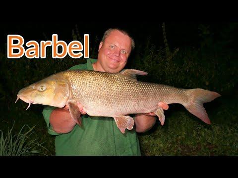 Barbel Fishing - The Loddon (Video 124)