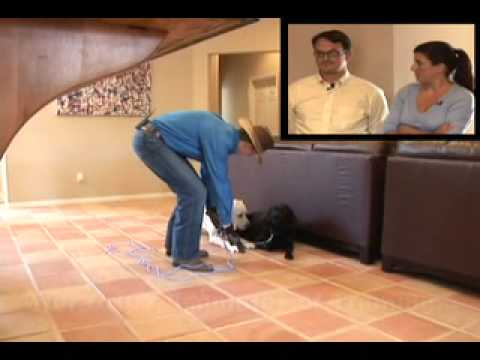 Out of Control Dog Behavior to Off-Leash Obedience in Minutes - Labradors - Don Sullivan