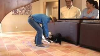 Don Sullivan The Dogfather Transforms Out Of Control Dog Behavior To Off Leash Obedience Labrador