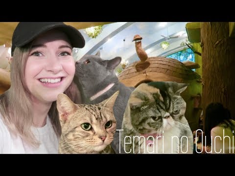Tokyo's Forest Themed Cat Cafe | Temari no Ouchi