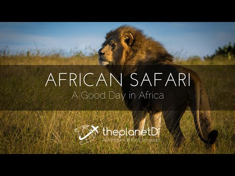 African Safari - A Good Day in Africa