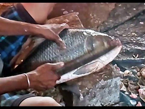 Catla Fish Cutting on Sunday Special | Sunday Fish Market | Catla Machhalee Caught cutting cleaning
