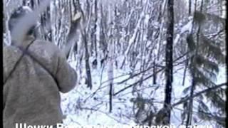 Охота с Восточно-сибирской Лайкой