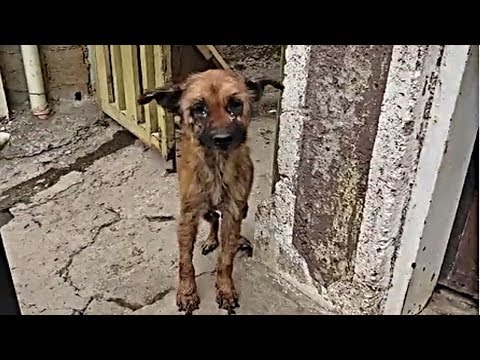 Rescue Homeless Dog Abandoned, Sick & Starving Have A Warm Place & Loving Family.