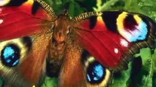 Урок бабочки или Закон успеха!!! mp4