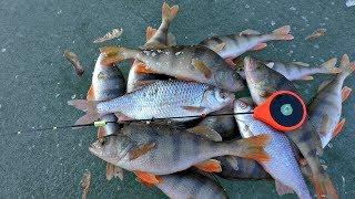 УЛОВИСТАЯ БЕЗМОТЫЛКА РАЗВЕДЧИК! Зимняя рыбалка на озере