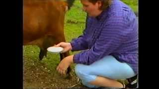 Rapid Mastitis Test in a Milking Goat
