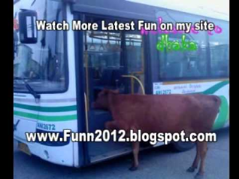 Funny Videos, Video Clips Humor, Comedy, Video Sketches Funny
