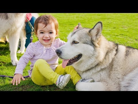 Funny Babies Laughing Hysterically at Dogs Compilation (2016)
