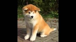 las 15 razas de perros mas lindas del mundo