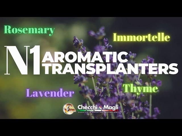 CHECCHI & MAGLI - N1. AROMATIC TRANSPLANTERS