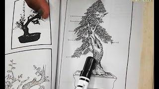 Bonsai, The Art and Science of Miniature Trees (Art e-FactsTV)