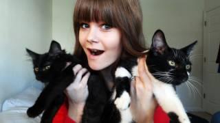 I Got Kittens!
