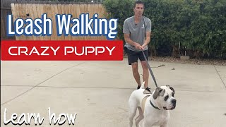 Does your dog pull, stop or fight the leash?  Learn how to handle it