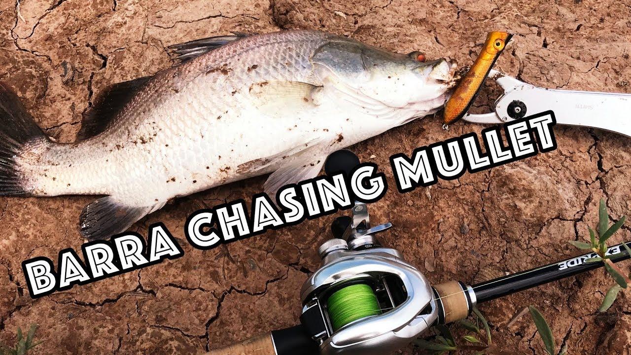 Kĩ Thuật Câu Lure Cá Chẽm Khi Chẽm Dí Táp Cá Đối