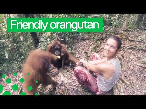 Orangutan Grabs Womans Arm and Refuses to Let Go