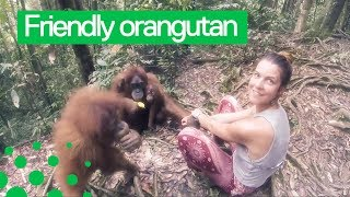 Orangutan Grabs Womans Arm and Refuses to Let Go